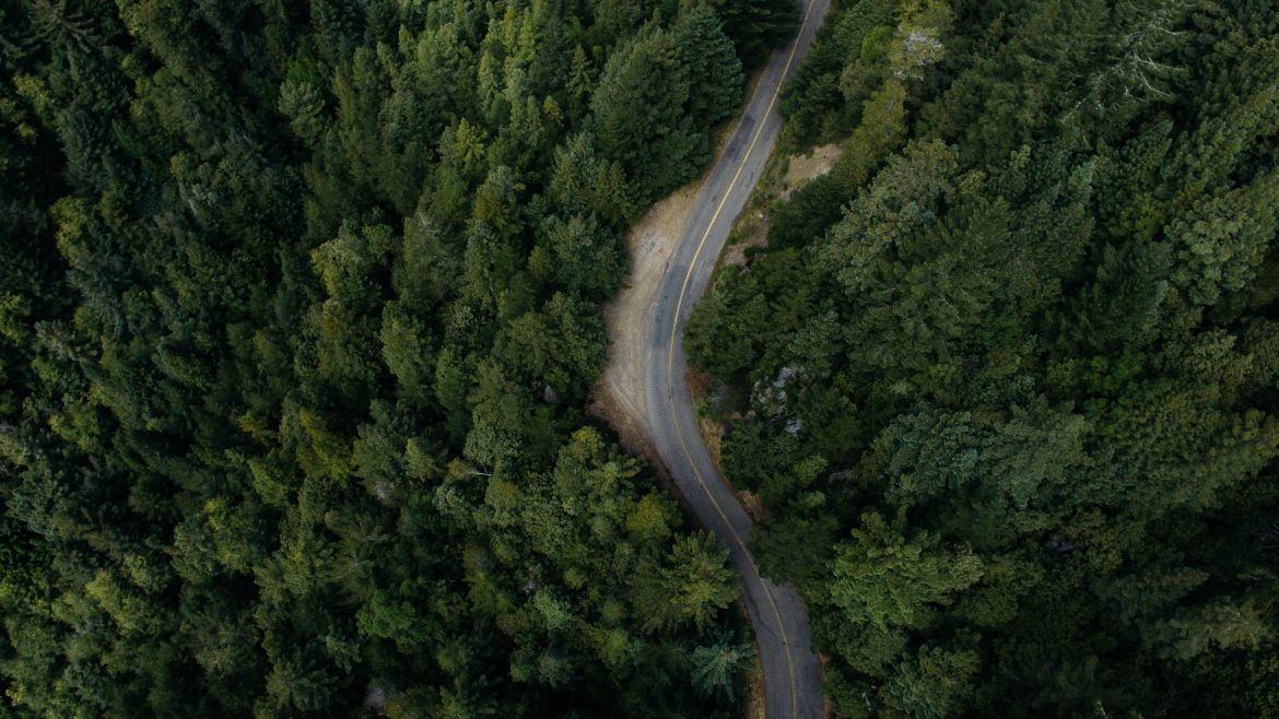 road in forest_free download_pexels-photo-132985